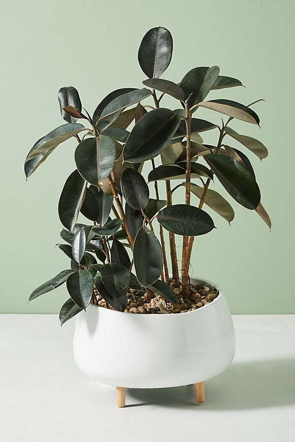 Oversized Ceramic Planter $98.00