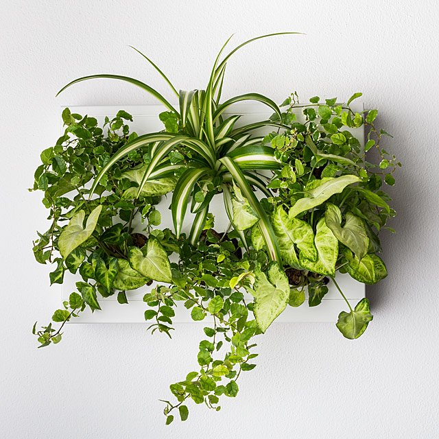 Hanging Garden Wall Planter $50.00