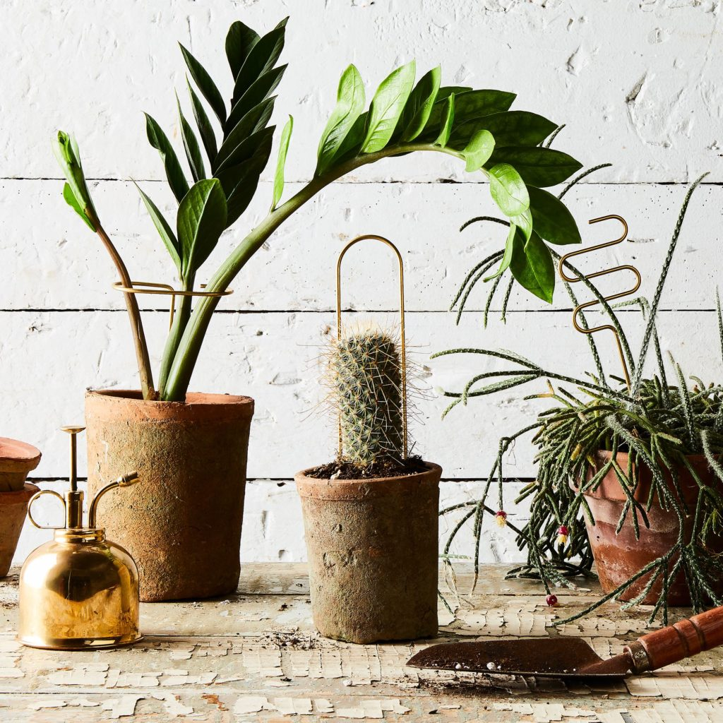 Plant Sticks (Set of 6) $64
