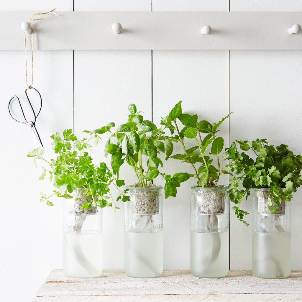 Eco Planter Herb Kit $25–$100