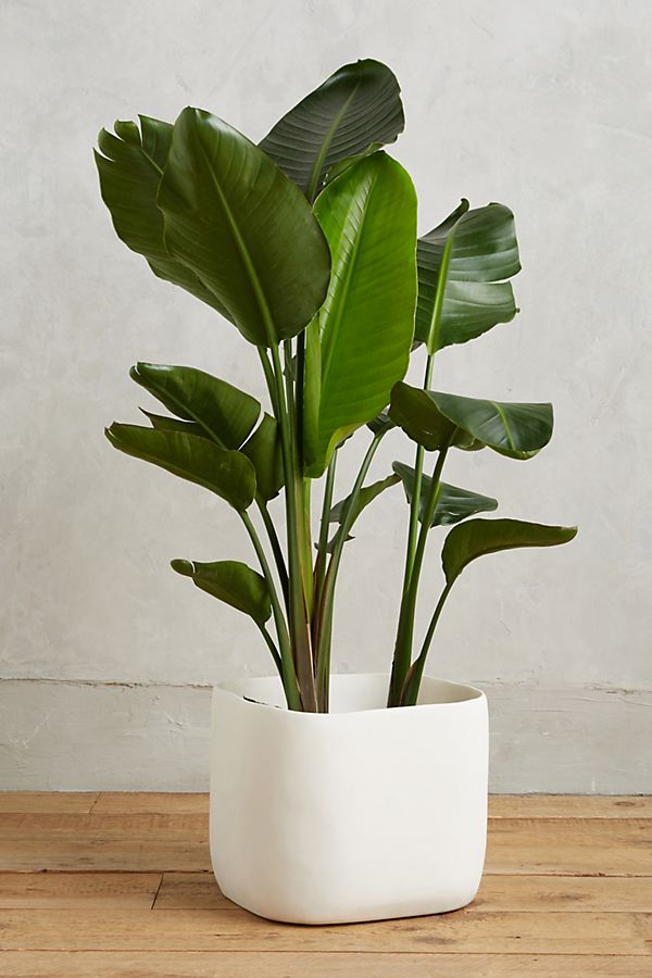 Sculpted Planter $448.00
