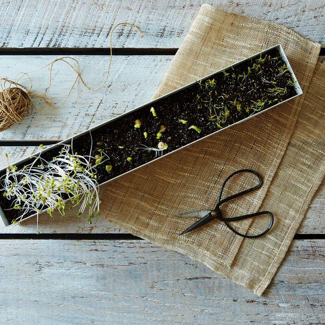 Microgreens Veggie Window Box Kit $48