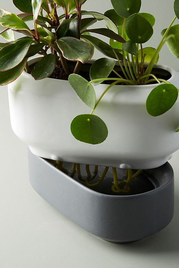 Chef'n Self-Watering Herb Planter $38.00