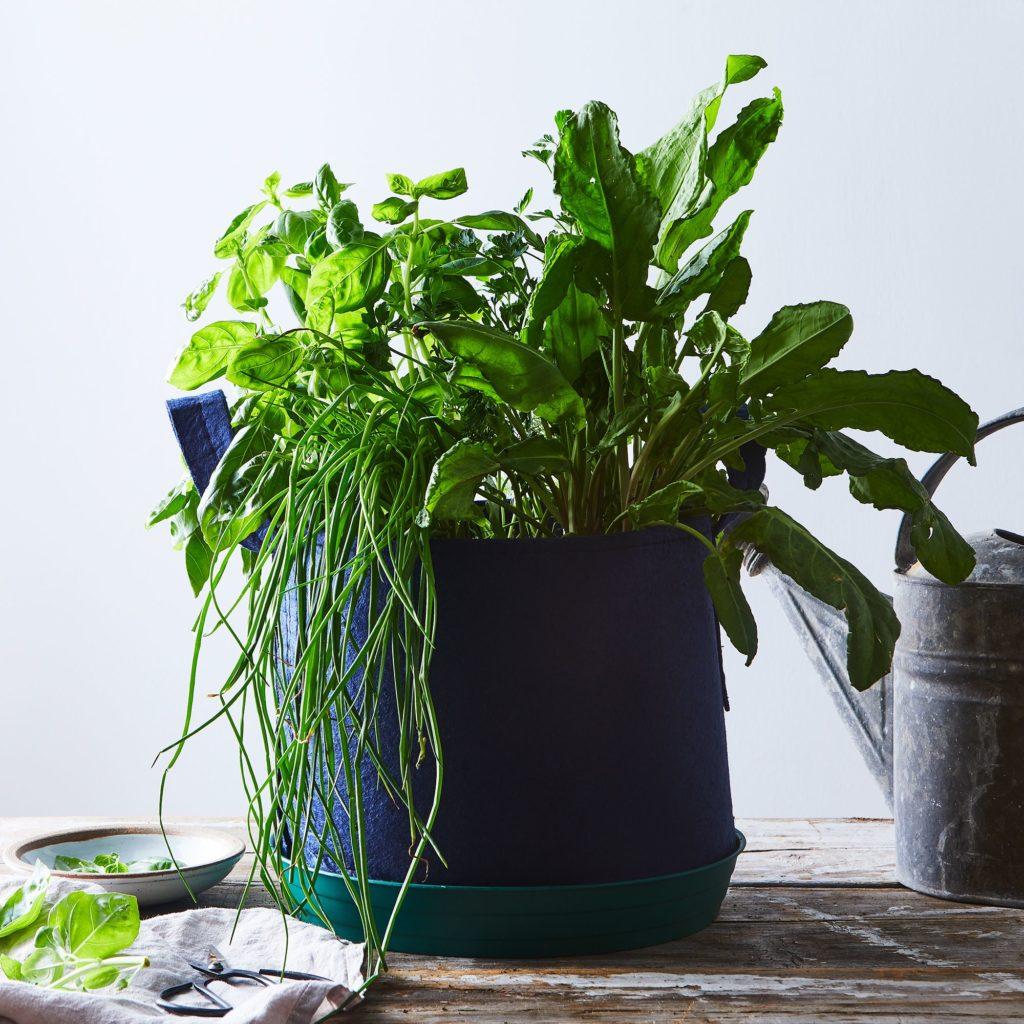 Seedsheet Grow-Your-Own Container Garden $35–$50