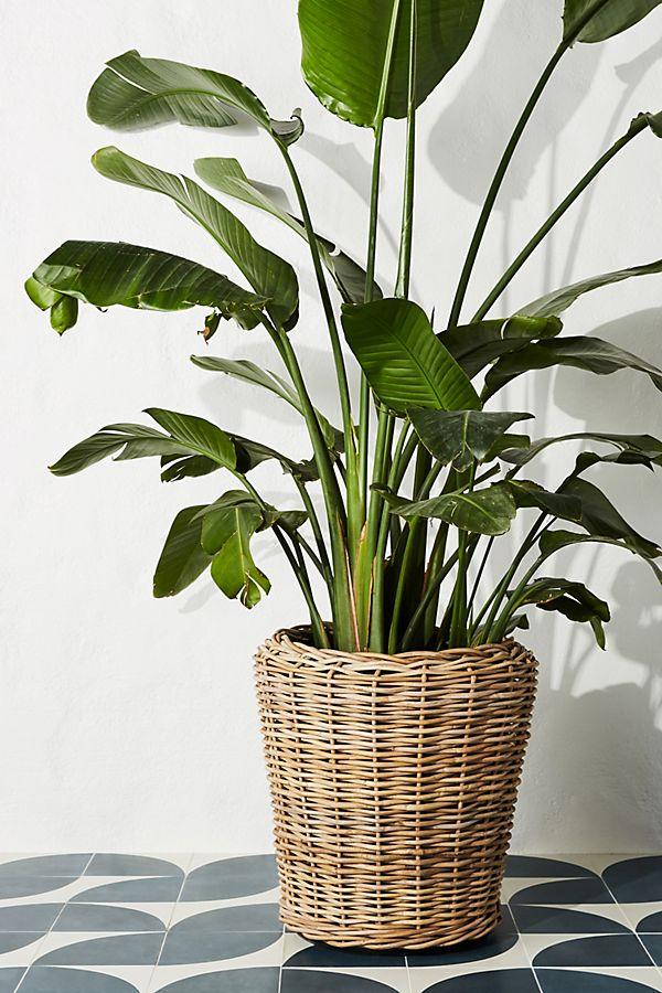 Rattan Basket Planter $198.00
