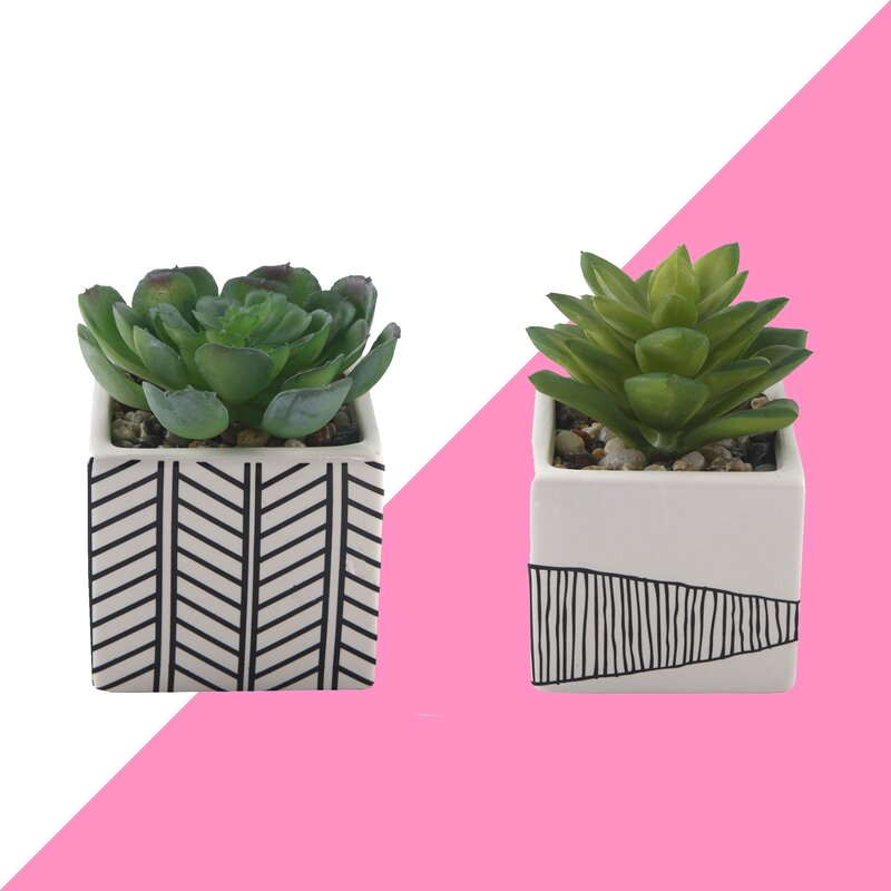 2 Piece Succulent Desktop Plant in Pot Set $26.99