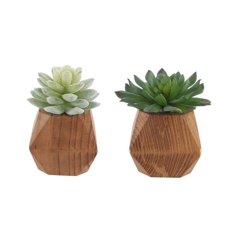 2 Piece Succulent Plant Set in Pot $32.99