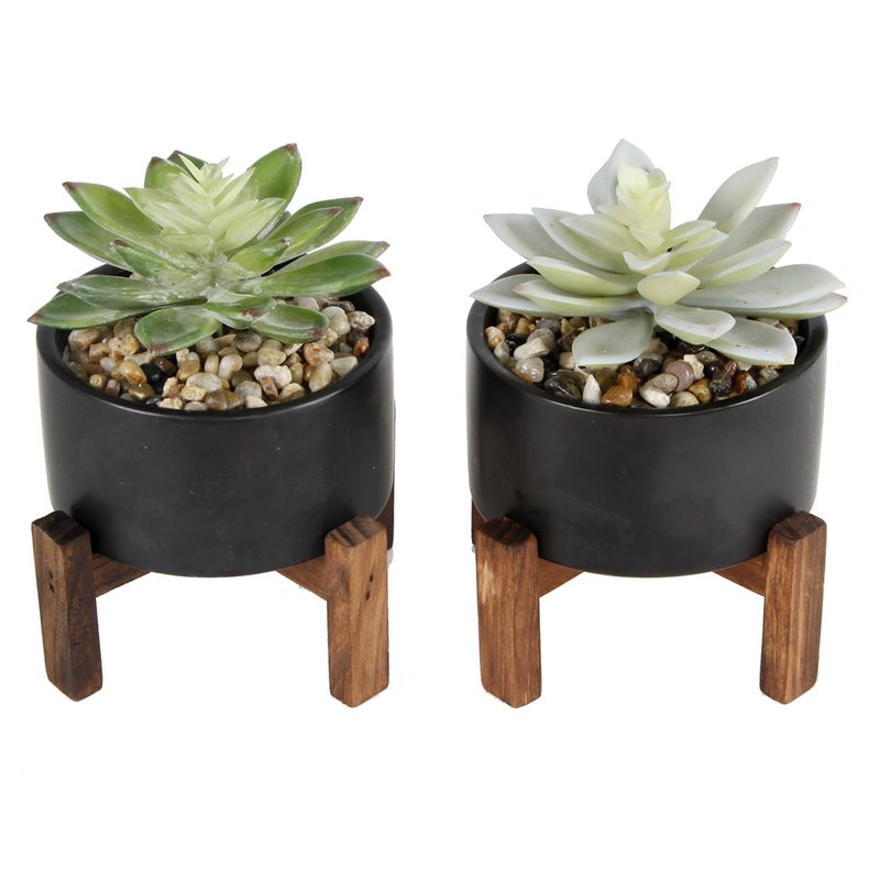 2 Piece Succulent Plant in Pot Set $35.99