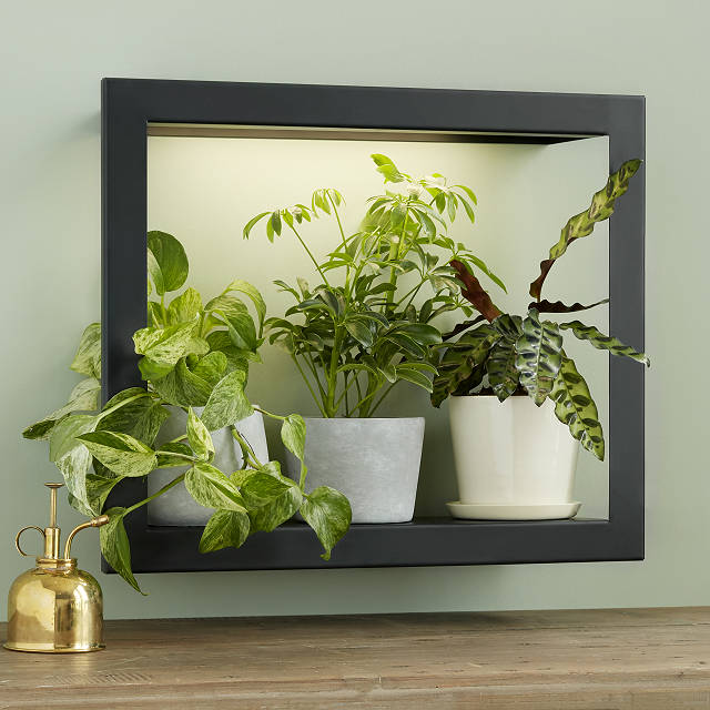 Growlight Frame Shelf $159.00