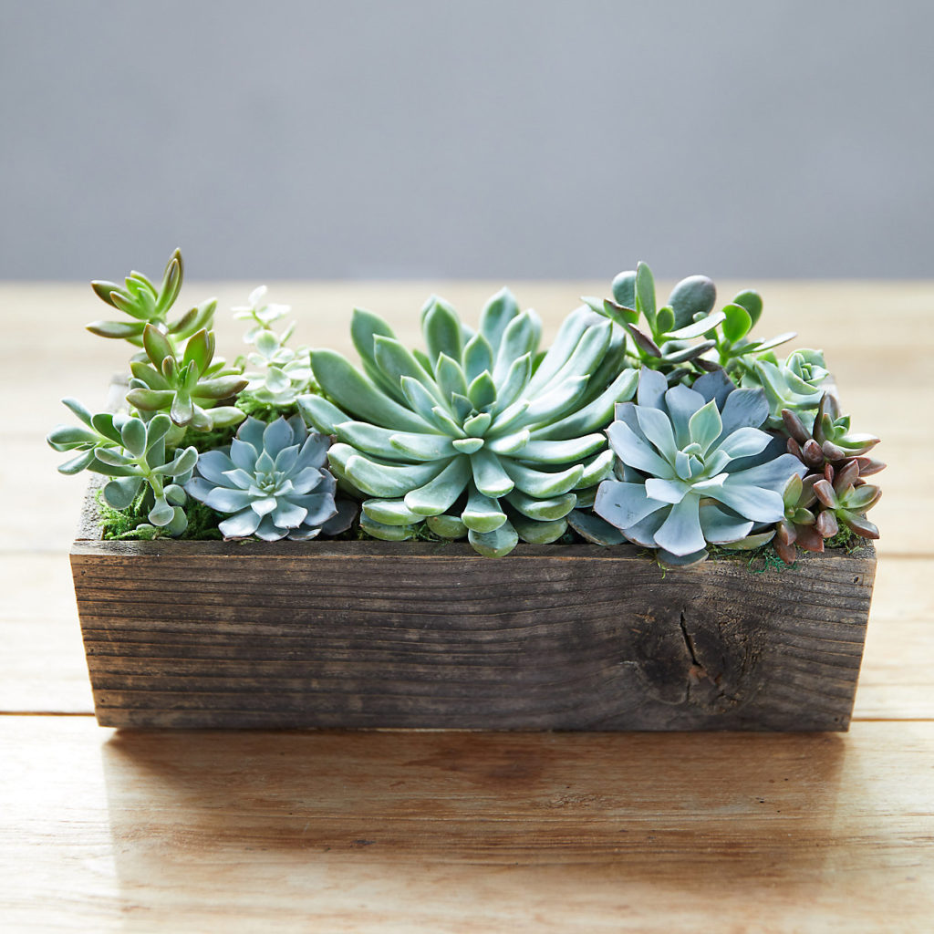 Succulent Garden, Wood Trough $78.00
