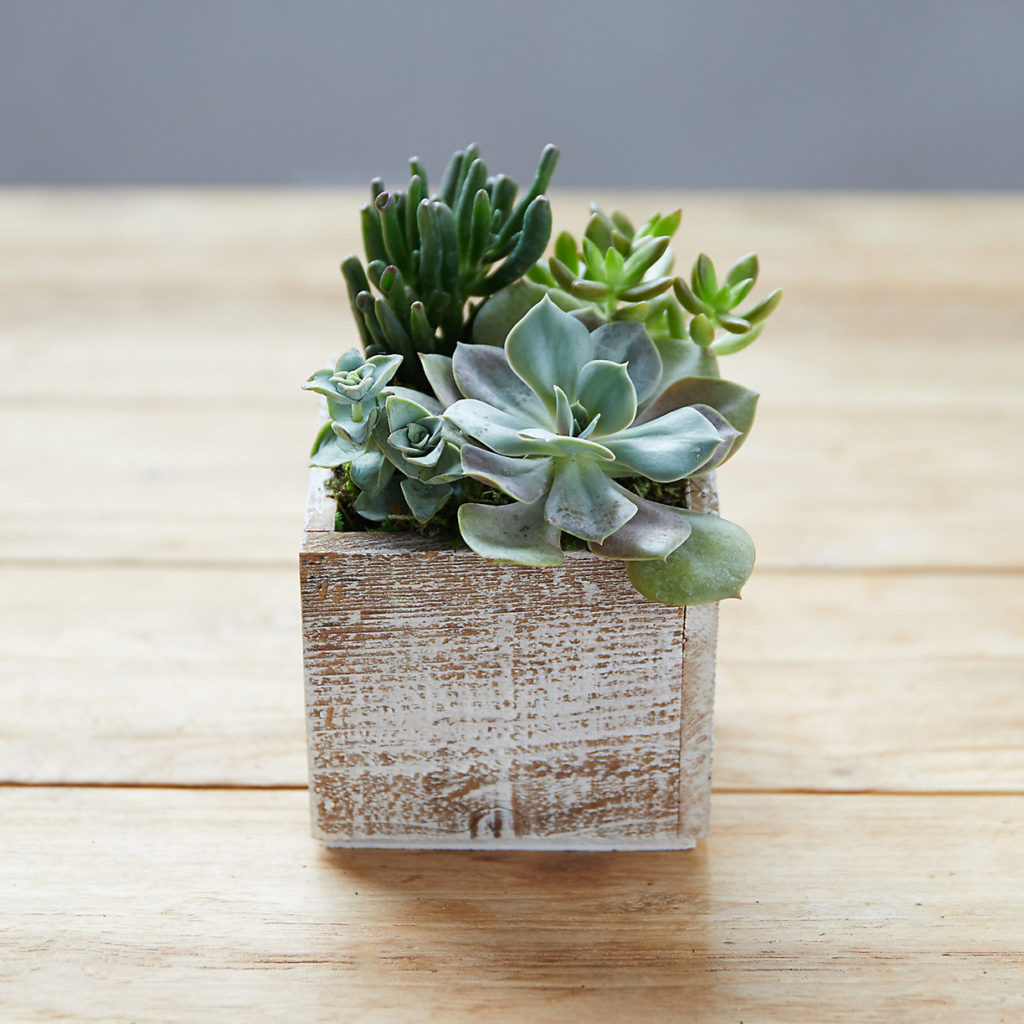 Succulent Garden, Square Wood Pot $48.00