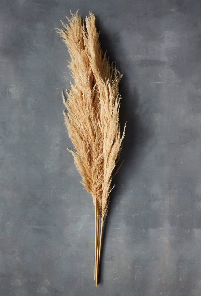 Dried Pampas Grass $48.00
