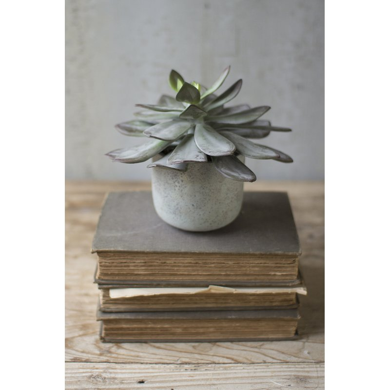 Desktop Succulent Plant in Cement Pot $132.99
