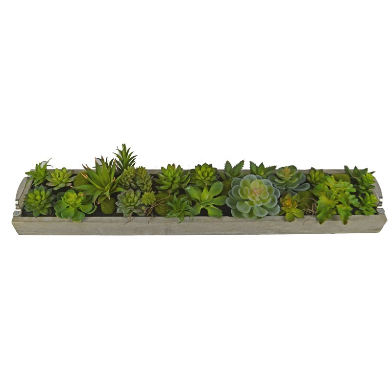 Desktop Succulent Plant in Rectangular Pot$63.99