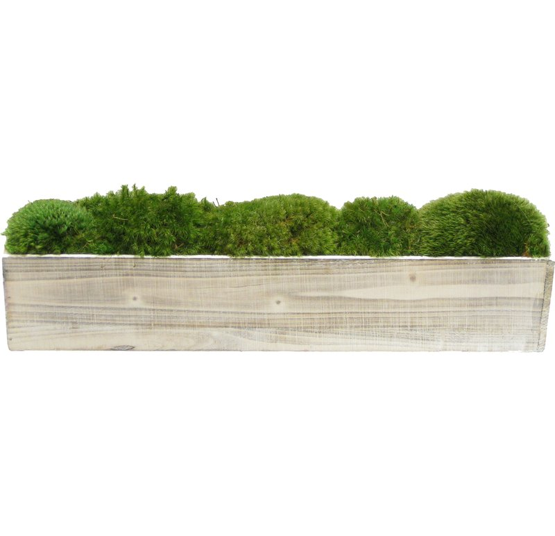 Moss Plant in Planter $85.99