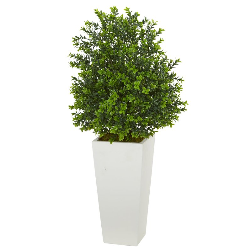 Sweet Ficus Grass Plant in Tower Planter $87.99