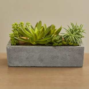 Floor Succulent Plant in Concrete Planter $58.65