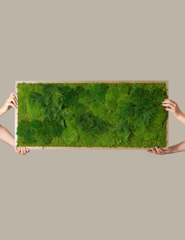 "Preserved Large Living Wall, 40"" x 18"" $940.00"