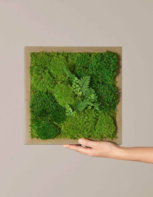 "Preserved Mini Living Wall, 12"" x 12"" $215.00"