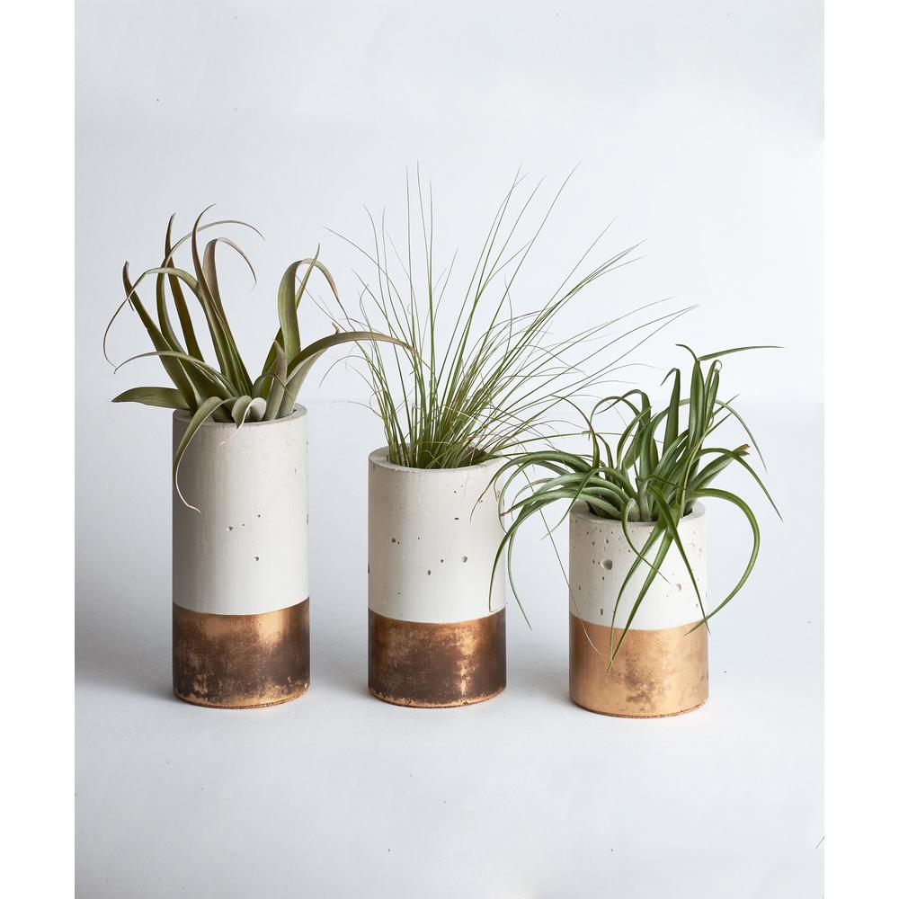 Bronze Concrete Cylinder Trio with Air Plants $48.49