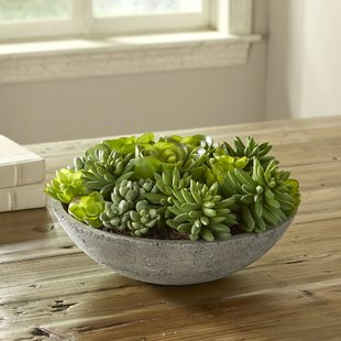 Potted Mixed Succulents Plant $122.99