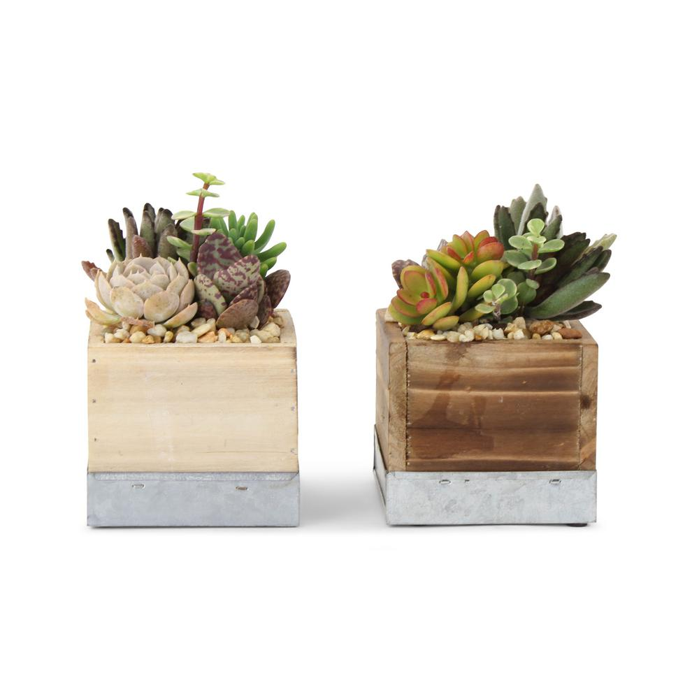 4 in. Succulent in Wood Box Combo 4 in. (2-Plants) $21.95