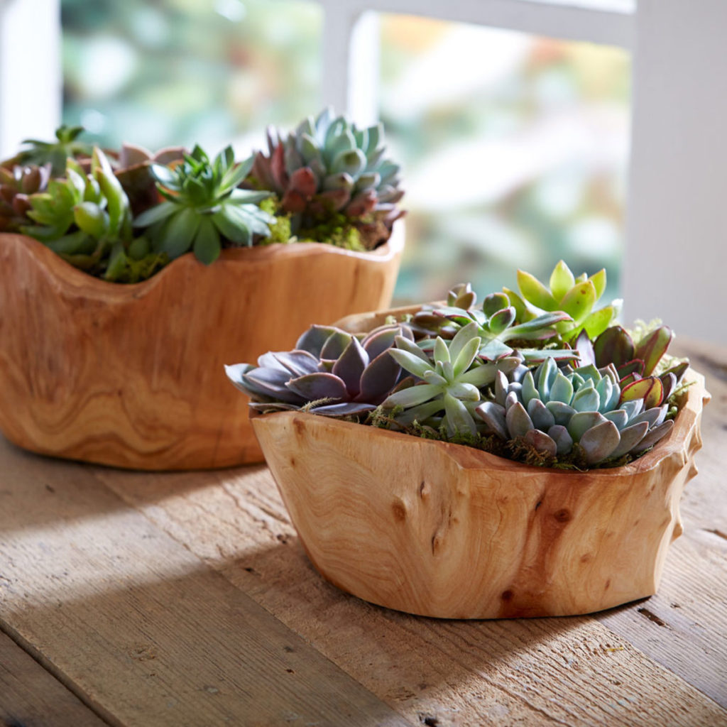 Succulent Garden In Root Of The Earth Bowl $79.00