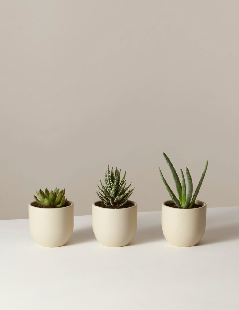 Succulent Trio In Mini Grant Planter $70.00