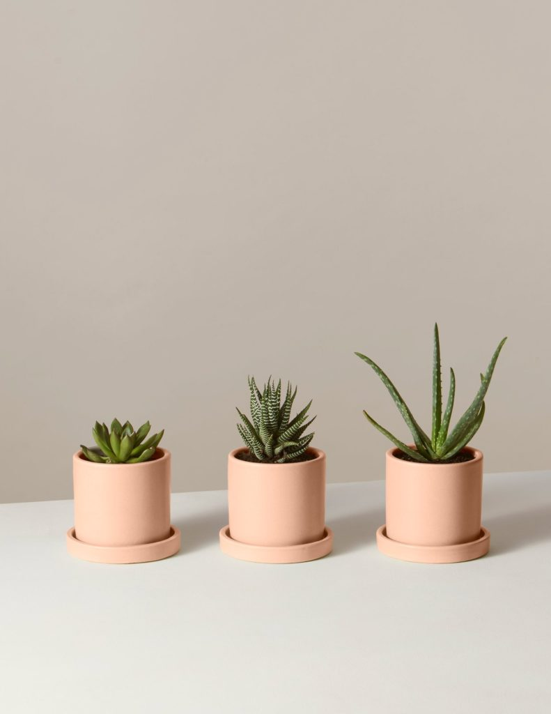 Succulent Trio In Mini Hyde Planter $75.00