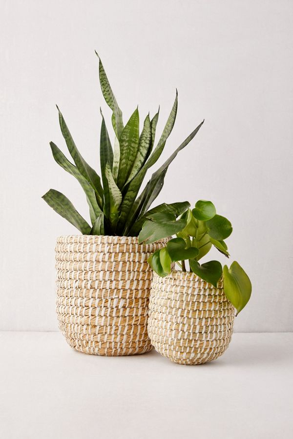 Dia Natural Basket Planter $19.00–$29.00
