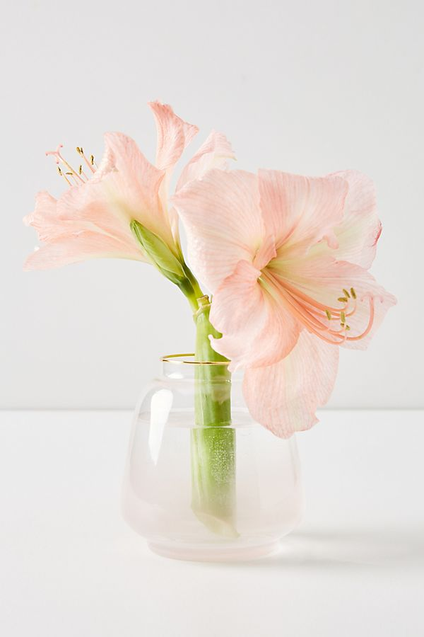 Marilyn Vase $16.00