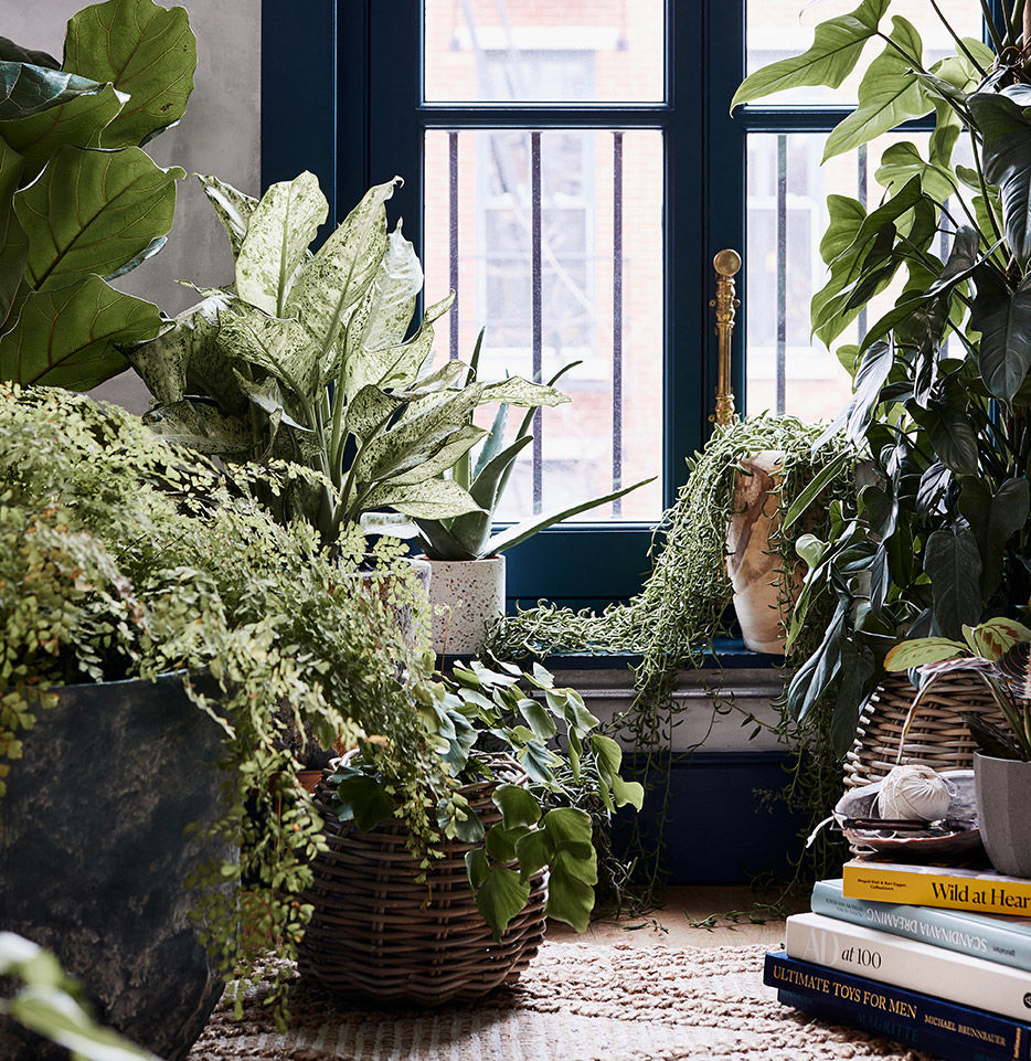HOW TO NURTURE YOUR PLANTS (AND YOURSELF)-ANTHROPOLOGIE