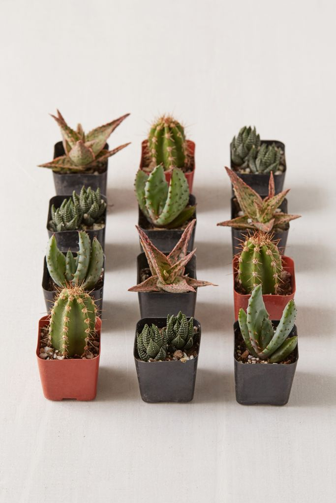 "2"" Live Assorted Hardy Plant - Set of 12 $48.00"
