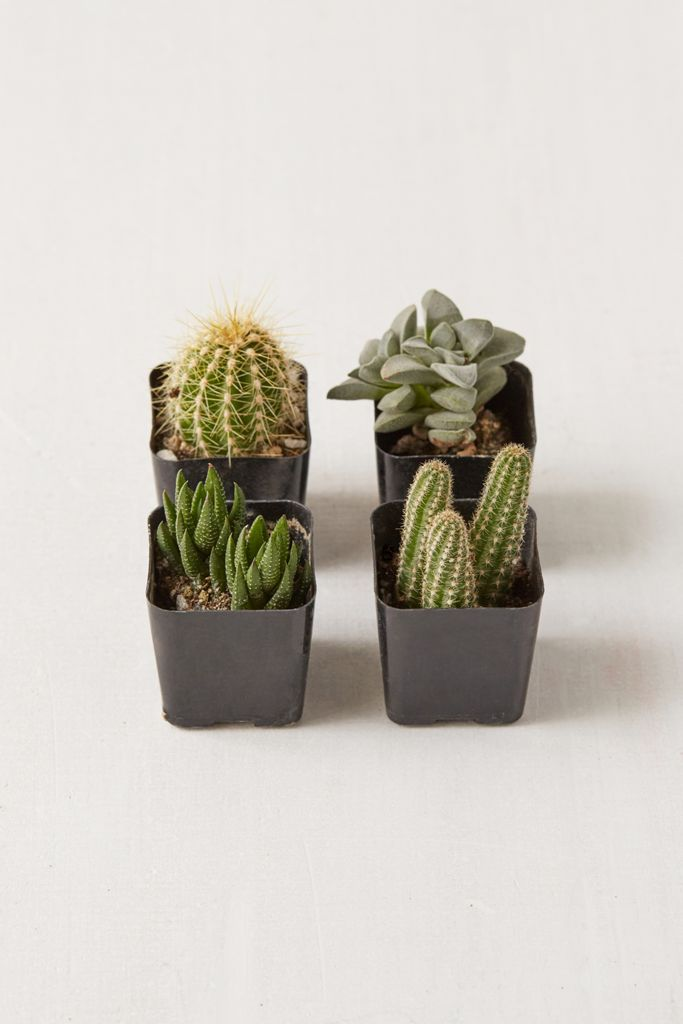 "2"" Live Assorted Hardy Plant - Set of 4 $20.00"