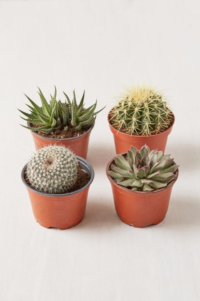 "4"" Live Assorted Hardy Plant - Set of 4 $40.00"