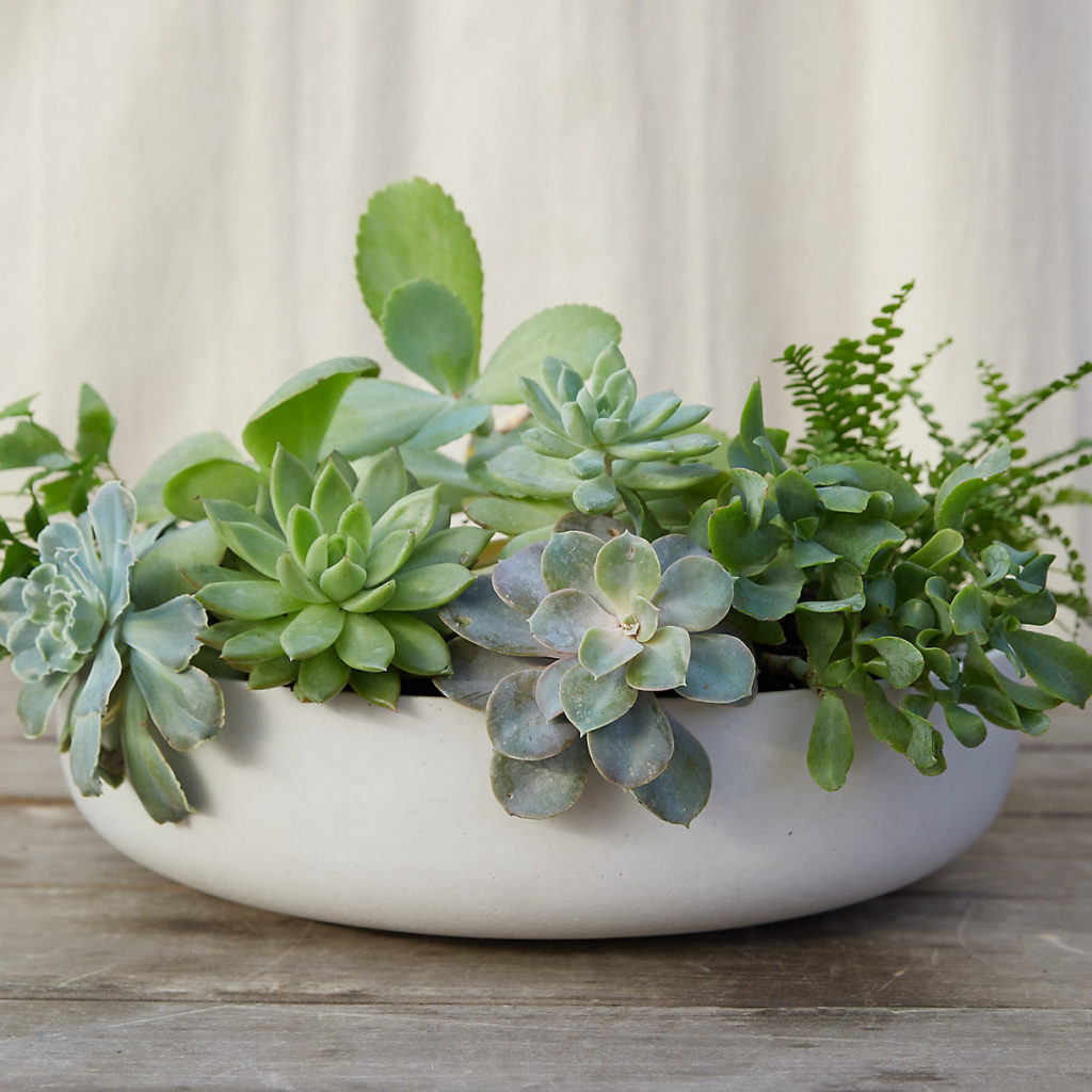 Fiber Concrete Bowl Planter $38.00