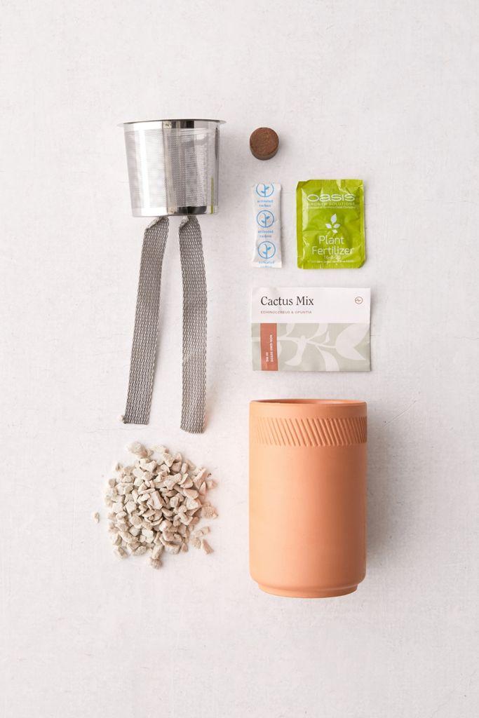Modern Sprout Terracotta Grow Kit $19.00