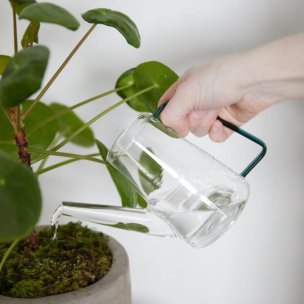 Glass Watering Can $24.00