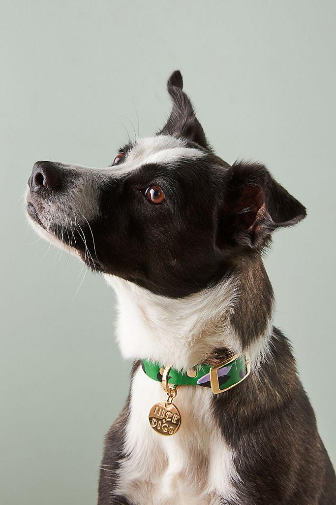 Nice Digs Animal Leather Dog Collar$50.00