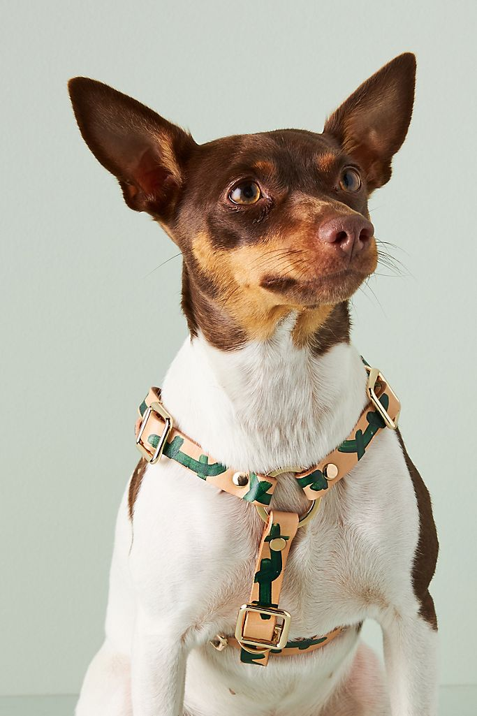 Nice Digs Making Shapes Leather Dog Harness $80.00