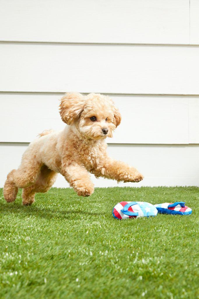 BARK Freedom Flip-Flops Dog Toy $8.00