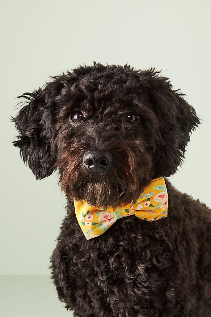The Foggy Dog Harper Bow Tie $19.00