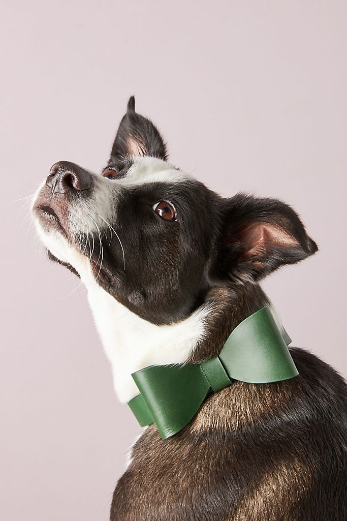 Gianni Cooling Leather Bow Tie Dog Collar $98.00