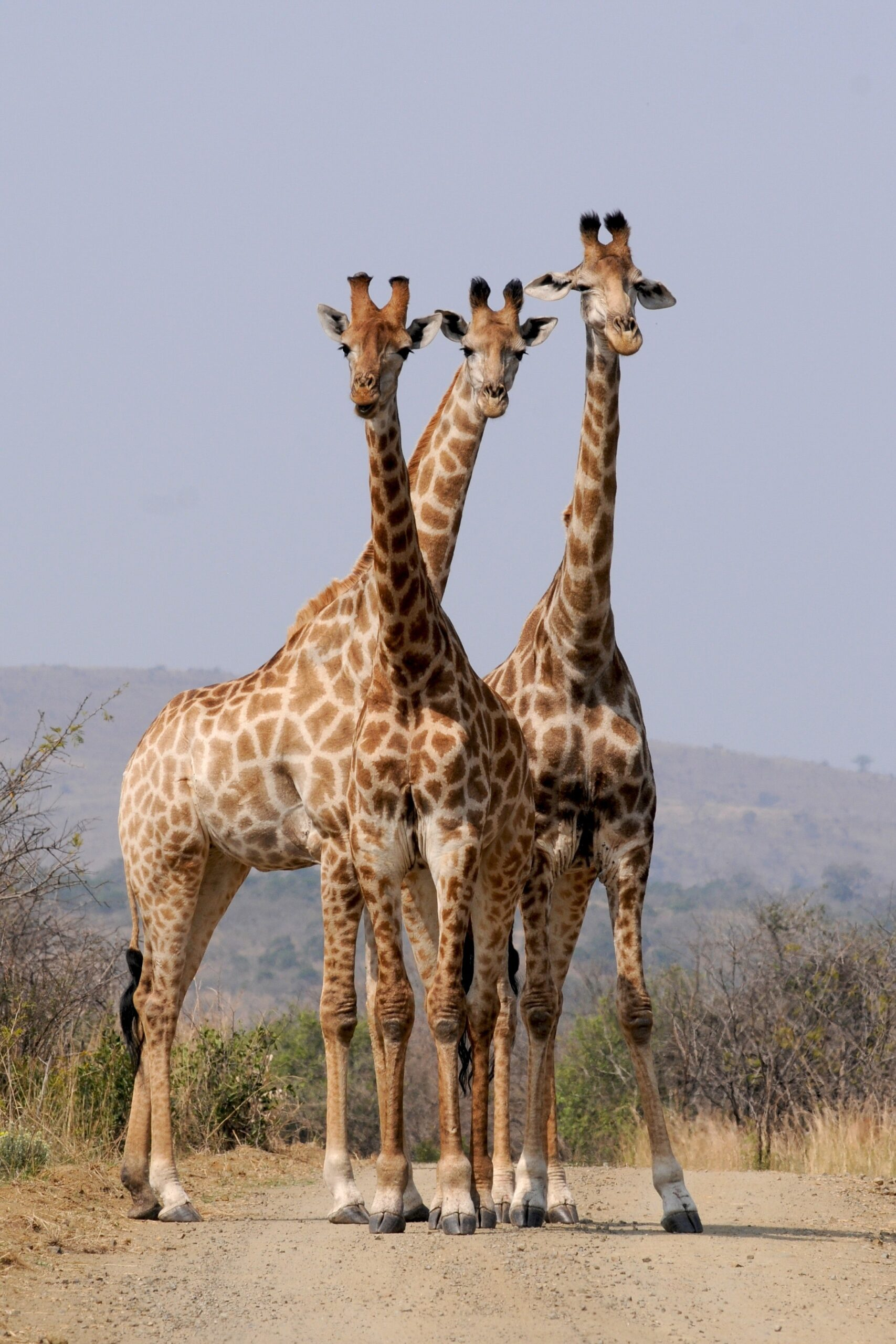 Sun & Safari-This trip includes remote overnight camping in the Serengeti National Park $3,206.00