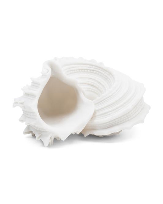 CONTRAST Sandstone Delphinula Shell $29.99